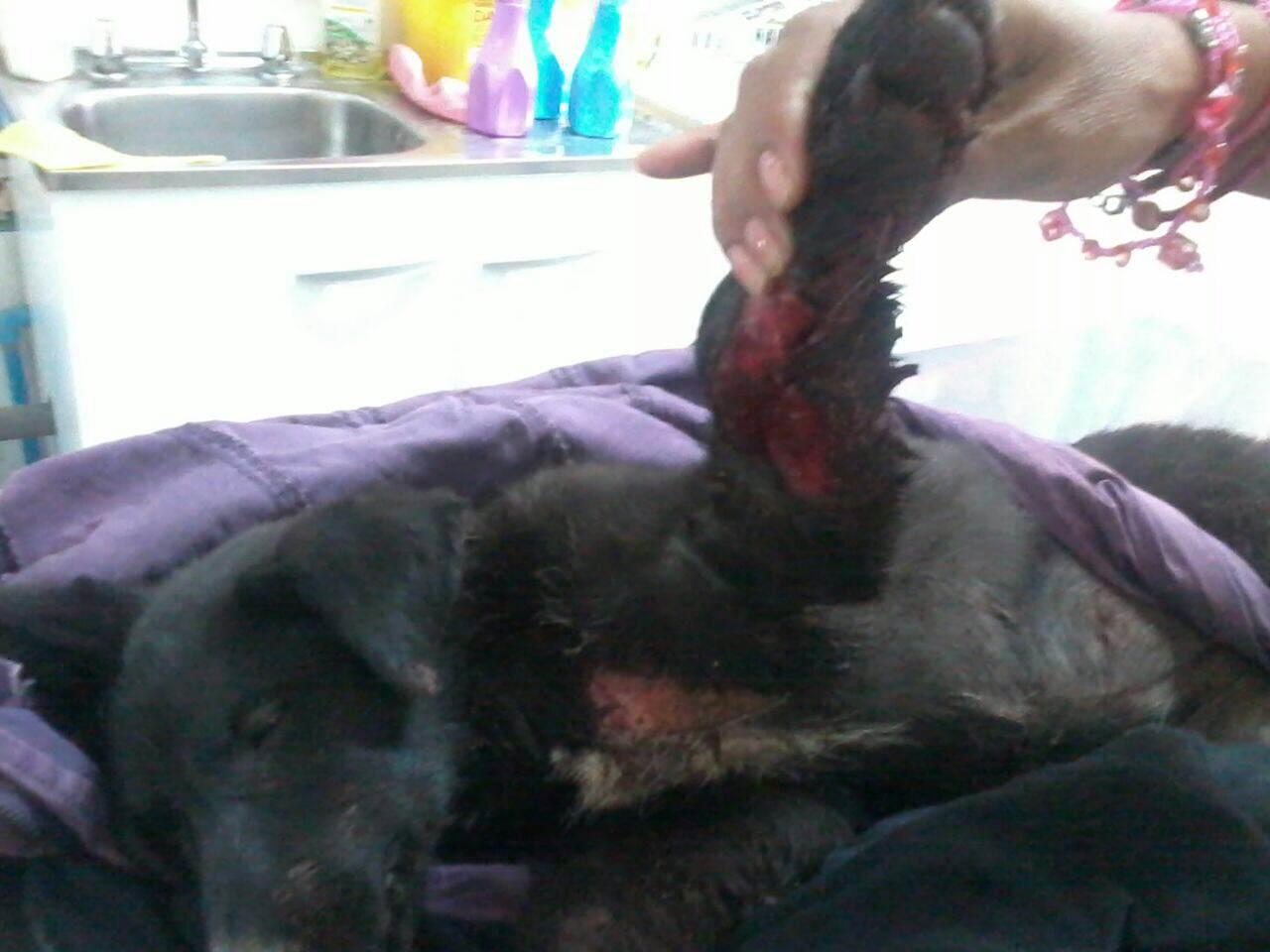 Grave Caso de Maltrato Animal