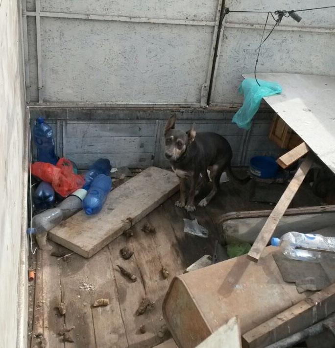 Perro Estaba Encerrado en Camión sin Agua ni   Comida
