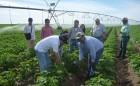 Agricultores de Azapa Locales y sus Éxitos en Uso de Tecnologías