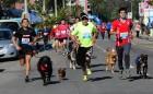 """Las Mascotas Tendrán su""""Corrida Canina""""este Sábado en las Pérgola de las Banderas"""
