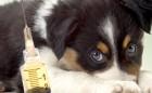 vacunas-de-perros-y-cachorros
